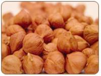 Beaked Hazelnuts