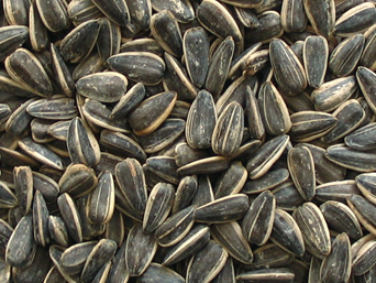 Sunflower Seeds Black Oil Sunflower Seed Exporter S N