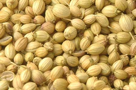 coriander seeds to cure mouth ulcers