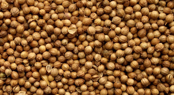 Whole Coriander Seeds from Bulgaria and Ukraine